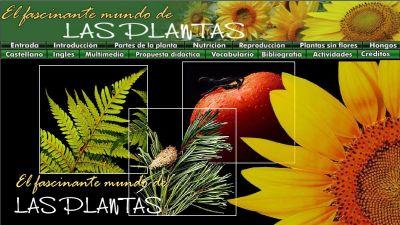 plantas-2